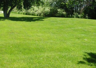lawn-photos-3-064