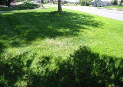 lawn-photos-3-066