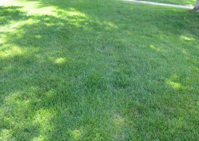 lawn-photos-3-067