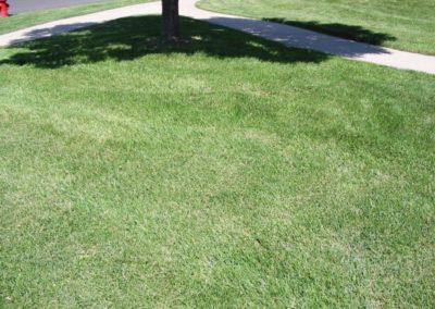 lawn-photos-3-068