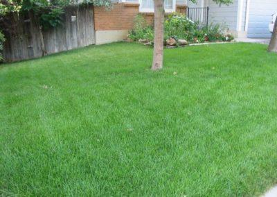 lawn-photos-7-003