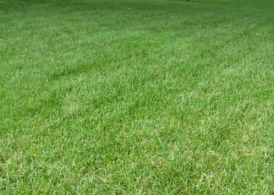 lawn-photos-7-008