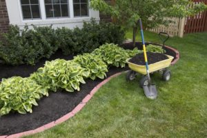 Mulching Garden And Fertilizing Lawn