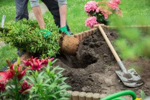 Organic Garden And Lawn Food Fertilizers
