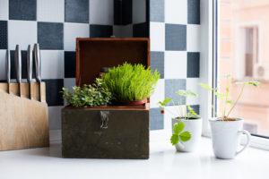 Starting A Little Herb Garden