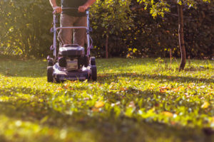 A Natural Pet Friendly Fertilizer Mulching Leaves