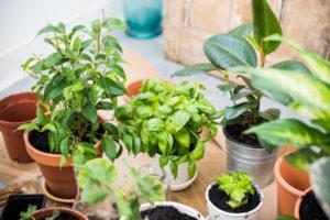 Organic Fertilizer For Healthy Houseplants