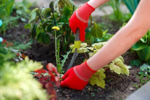 Fall Fertilizer Promotes Healthy Spring Grass Eliminates Weeds