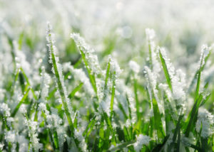 Organic Lawn Food During Winter Months