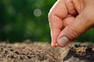 Get Growing Get The Most Natural Fertilizer