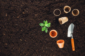 garden soil compost for plants starting from seed