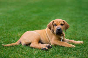 Pet Friendly Green Lawn Fertilizer