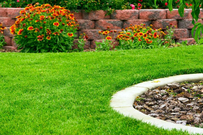 feed grass fertilizer natural beauty