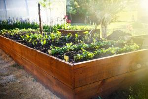 garden compost how to fertilizze