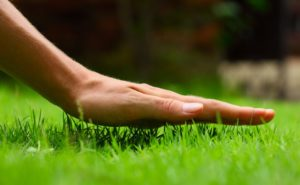 grass from seed fertilizer lawn care tips